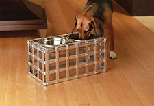 Dog Bowls | 20% Off Storewide | Bowls, Feeders, Dog Food Containers, Dog Placemats, Treat Jars