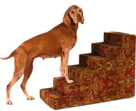 Dog Car Ramps & Steps |
