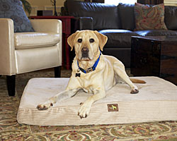 Luca for Dogs | 15% Off Storewide! Dog Beds & Pet Beds, Mats