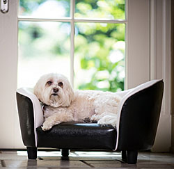 Dog Sofas |20% Off Storewide!|  Dog Sofa Beds, Dog Couches