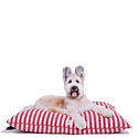 Harry Barker 20% Off |  Harry Barker Dog Beds Monogrammed