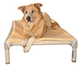 Kuranda  | FREE SHIP ChewProof Dog Beds, Kennel Beds, Free Shipping on Orders Over $125