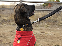 Ruffwear Outdoor Gear | 20% Off Storewide - Coats, Boots, Harnesses, Collars, Leashes
