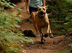 Ruffwear Outdoor | Dog Packs | Dog Boots | Dog Collars & Leashes | 15% Off Storewide