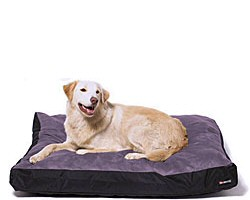 Big Shrimpy Beds & Mats |  Big Shrimpy Dog Beds