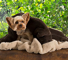 Doggie Home Decor | FREE SHIPPING- Dog Designer Home Decor - Dog Accessories - Rugs - Runners - Poufs - Blankets