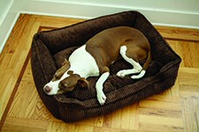 Corduroy Lounge Dog Bed