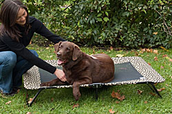 Outdoor Dog Beds  | Free Shipping on Orders Over $75