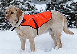 Ruffwear | 20% Off Storewide! - Beds, Harnesses, Collars, Leashes