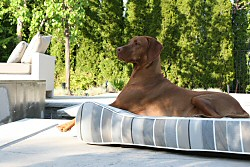 Outdoor Dog Beds | Outdoor Pet Beds - Sunproof - Waterproof