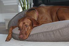 Bowsers Dog Beds | BOWSERS PET PRODUCTS | Donut Dog Beds | Bowsers