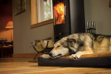 Summer Dog Beds | Outdoor Pet Beds - Summer - Sunproof - Waterproof