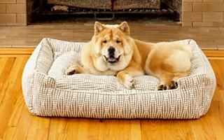 Jax Bones Dog Beds Pet Free Shipping Orders And Corduroy Lounge