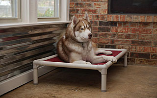 and homepage proof chew beds bed dog kuranda orthopedic