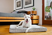 Jax & Bones Dog Beds | Jax & Bones Pet Beds | FREE SHIPPING ORDERS OVER $69 | Luxury Dog Beds